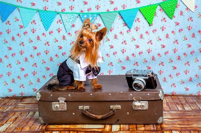 Pes a cesta lietadlom