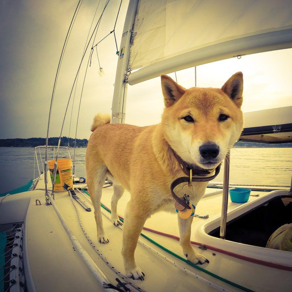 Pes na lodi